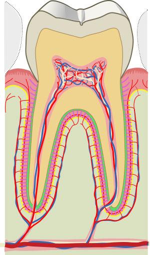 Parodonte